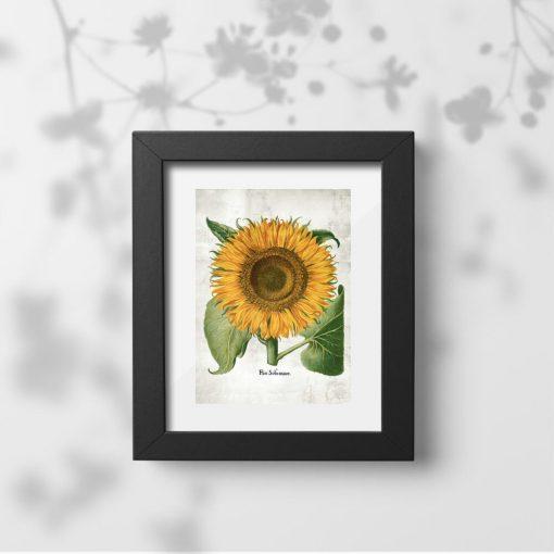 Plakat z kwiatem słonecznika i zielonymi liśćmi