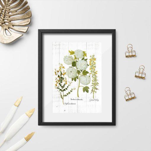 Plakat z kwiatostanem kaliny i wyki