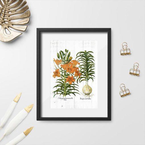 Plakat z łacińskimi nazwami lilii tygrysiej