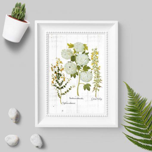 Plakat z łacińskimi nazwami roślin na tle desek