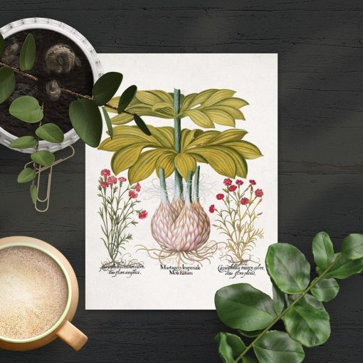 Plakat z lilią i bryłą korzeniową
