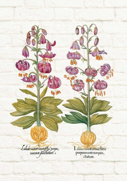 Plakat z motywem fioletowych lilii