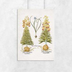 Plakat z motywem kwiatów i ich cebul