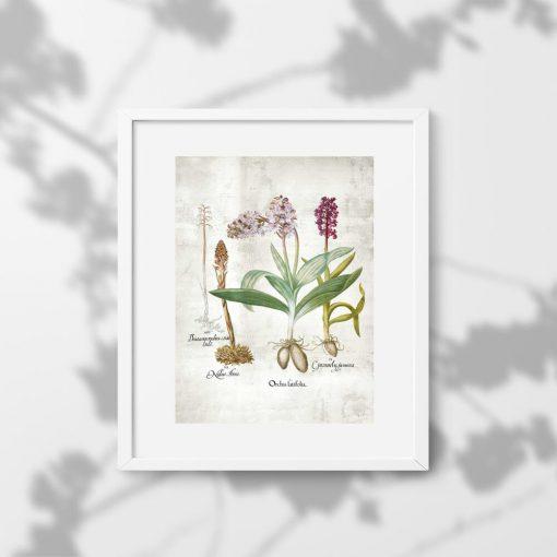 Plakat z motywem kwiatowych bylin