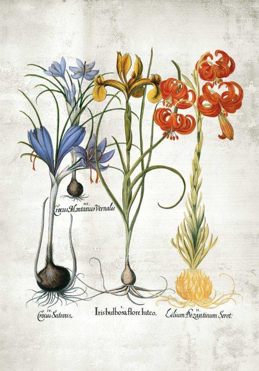 Plakat z motywem kwiatowym jako dekoracja sali biologicznej