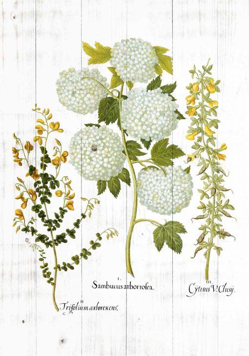 Plakat z motywem kwitnących roślin na tle desek