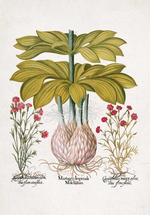Plakat z motywem lilii do oprawienia w ramę
