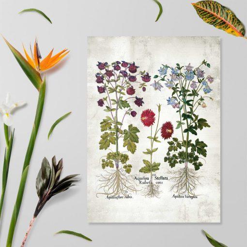Plakat z motywem ogrodowych kwiatów i łacińskich nazw