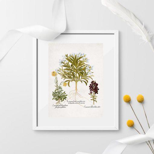 Plakat z motywem roślin łąkowych