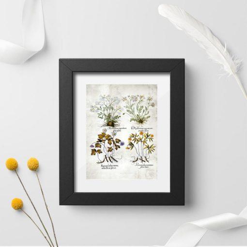 Plakat z nasturcją i ziołami