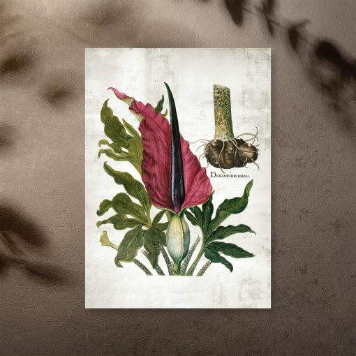 Plakat z naukową nazwą rośliny zielnej