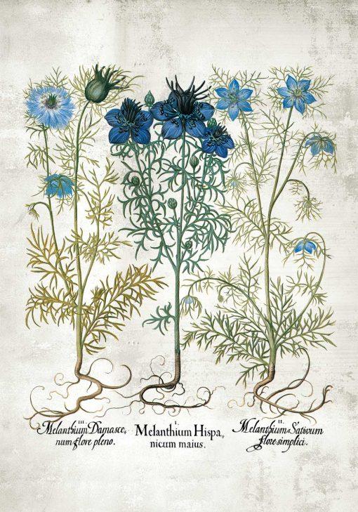 Plakat z niebieskimi kwiatuszkami