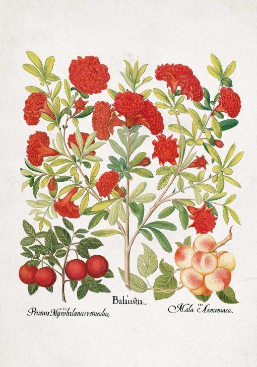 Plakat z owocami jadalnymi