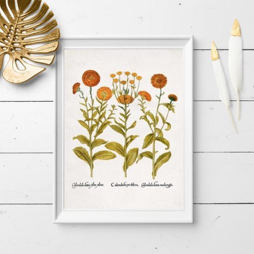 Plakat z pomarańczowymi kwiatkami do oprawienia