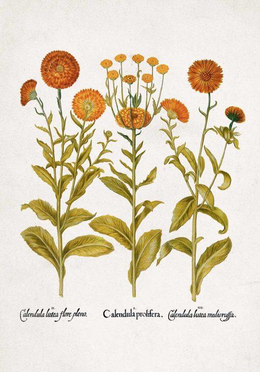 Plakat z pomarańczowymi kwiatuszkami do ozdoby szkoły