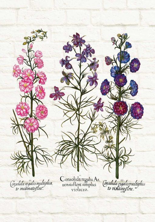 Plakat z roślinami dzikorosnącymi i łacińskimi nazwami