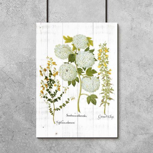 Plakat z roślinami i deskami