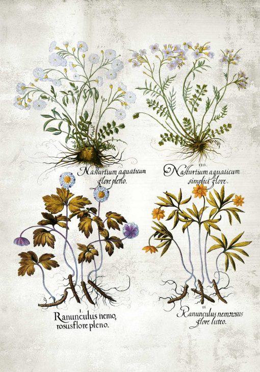 Plakat z roślinami leczniczymi do dekoracji apteki