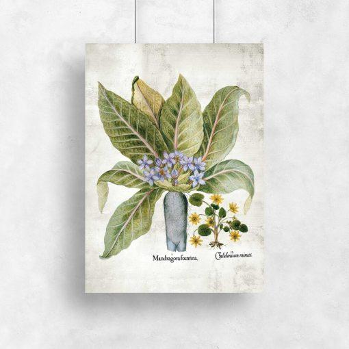 Plakat z roślinami legendarnymi