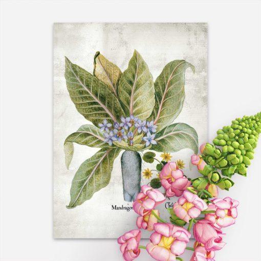 Plakat z roślinami magicznymi do apteki