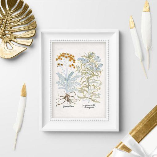 Plakat z roślinami ozdobnymi do ogrodu