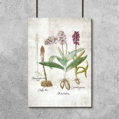 Plakat z roślinami z rodziny storczyków