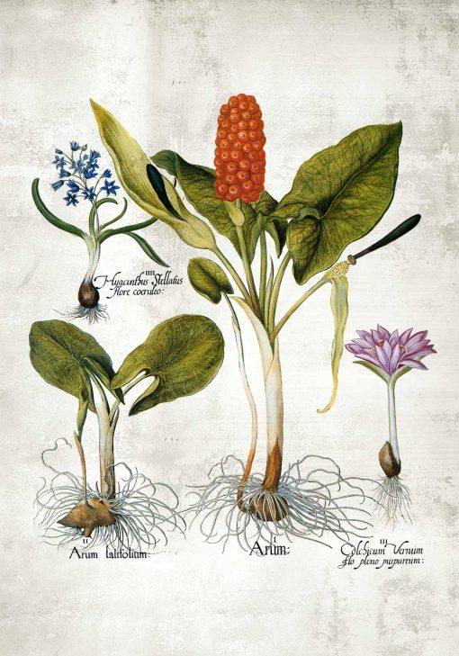Plakat z rycinami kwiatów wieloletnich
