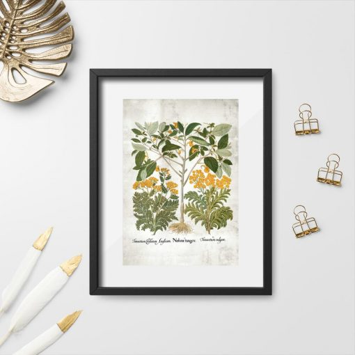 Plakat z ziołami do dekoracji apteki