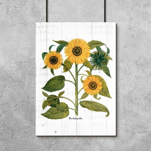 Plakat ze słonecznikami na tle desek