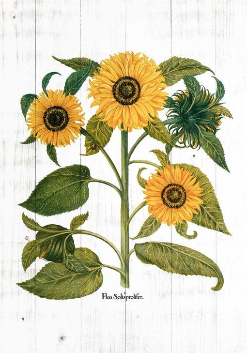 Plakat ze złotymi słonecznikami na deskach