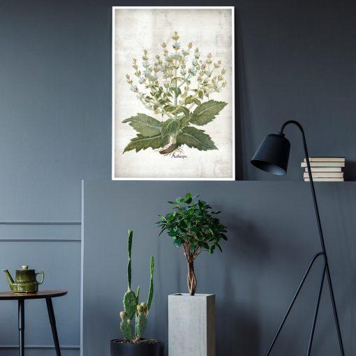Plakat zielarski z szałwią białą do salonu