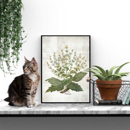 Plakat zielarski z szałwią białą na przedpokój