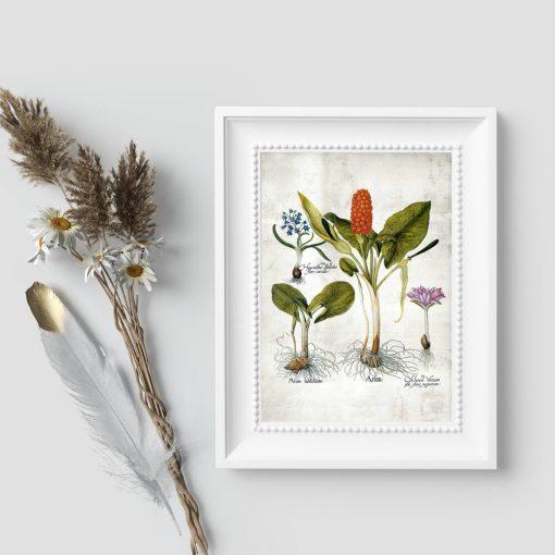 Plakaty botaniczne z rysunkami roślin