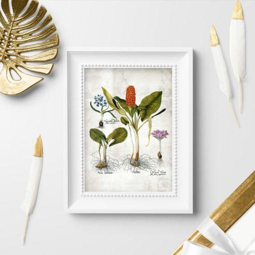 Plakaty kwiaty i kłącza oraz nazwy łacińskie