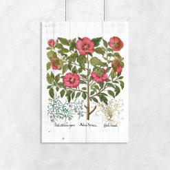 Plakaty rustykalne z kwiatami naszych babć