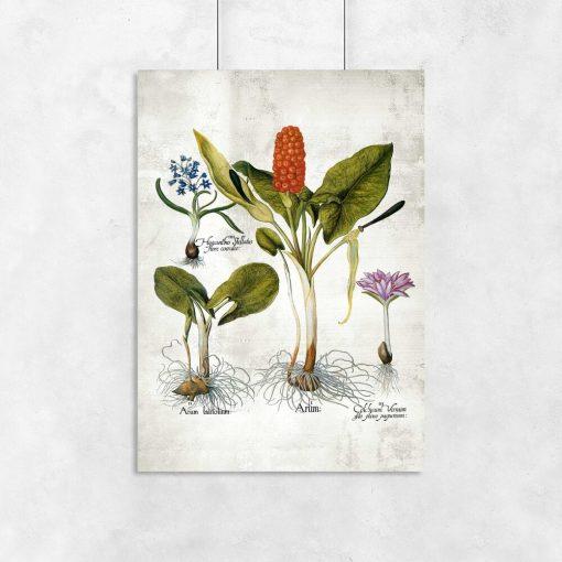 Plakaty z bylinami do ozdoby sali biologicznej
