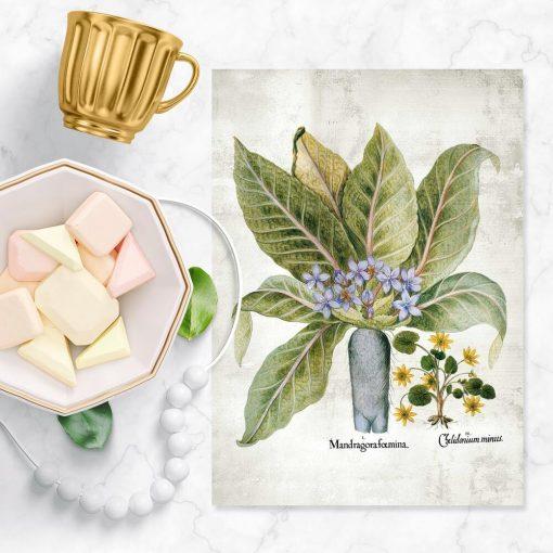 Plakaty z roślinami leczniczymi i truciznami