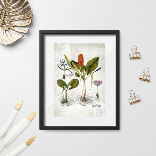 Plakaty z roślinami wieloletnimi i ich kłaczami