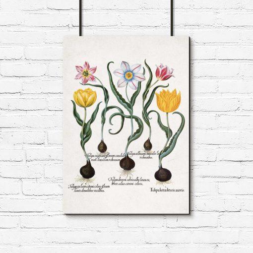 Plakaty z tulipanami i nazwami gatunkowymi