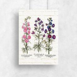 Plakaty z ziołami i ich systemem korzeniowym