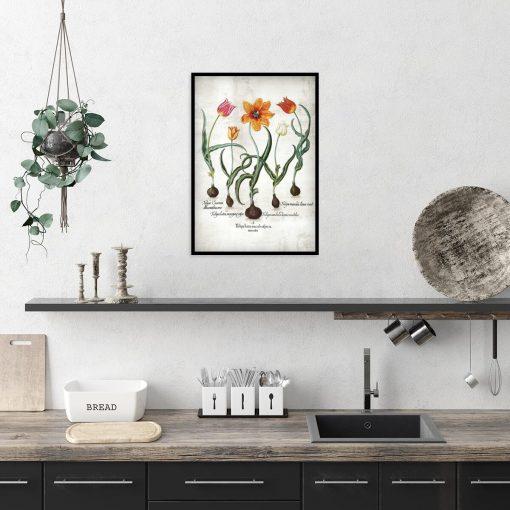 Płomienne tulipany - Plakat z łacińskimi nazwami do kuchni