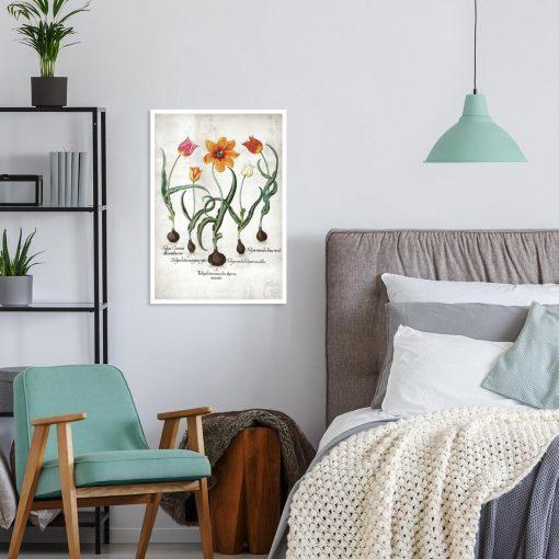 Płomienne tulipany - Plakat z łacińskimi nazwami do sypialni