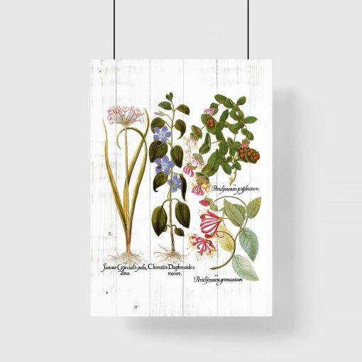 Rustykalny plakat z roślinami ozdobnymi