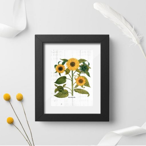 Słoneczniki na bielonych deskach na plakacie