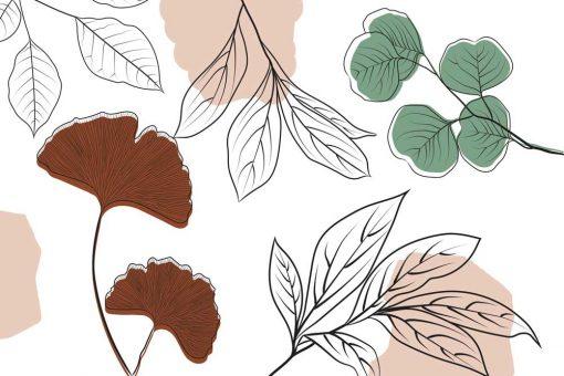Foto-tapeta liście miłorzębu i olszy