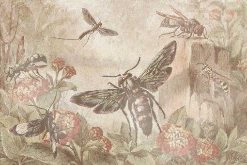 Fototapeta boho - Życie owadów do jadalni