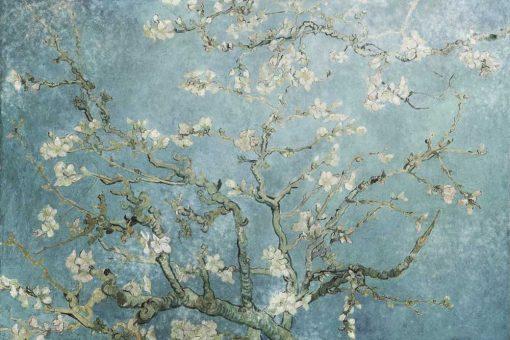 Kwitnący migdał - Fototapeta z reprodukcją