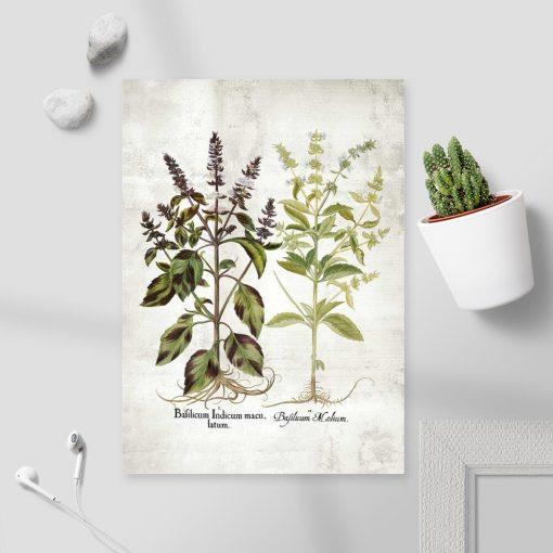 Plakat bazylia i jej kwiaty oraz łacińskie nazwy