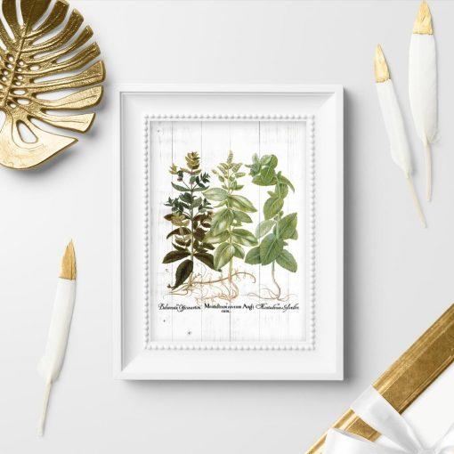 Plakat edukacyjny - rośliny zielne
