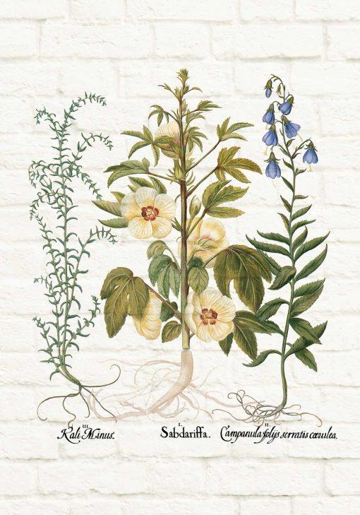Plakat edukacyjny z motywem roślin na tle cegieł